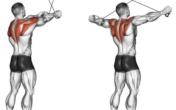 Muscoli deltoidi